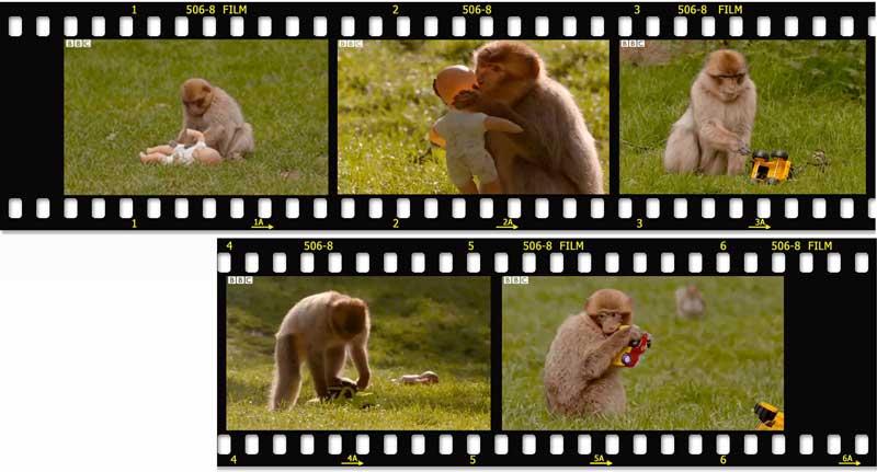 film-affen-BBC.jpg